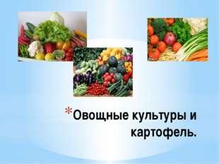 Овощные культуры и картофель.
