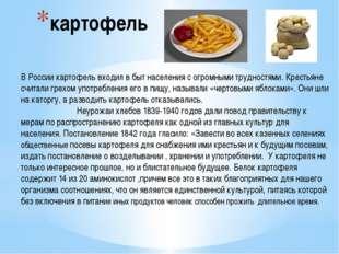 картофель В России картофель входил в быт населения с огромными трудностями.