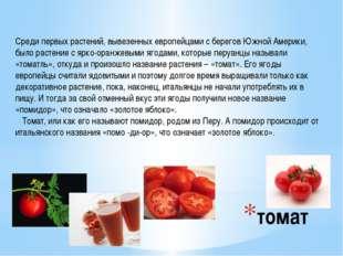 томат Среди первых растений, вывезенных европейцами с берегов Южной Америки,