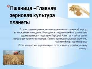 Пшеница –Главная зерновая культура планеты По утверждению ученых, человек поз