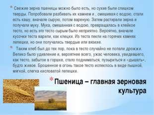 Пшеница – главная зерновая культура Свежие зерна пшеницы можно было есть, но