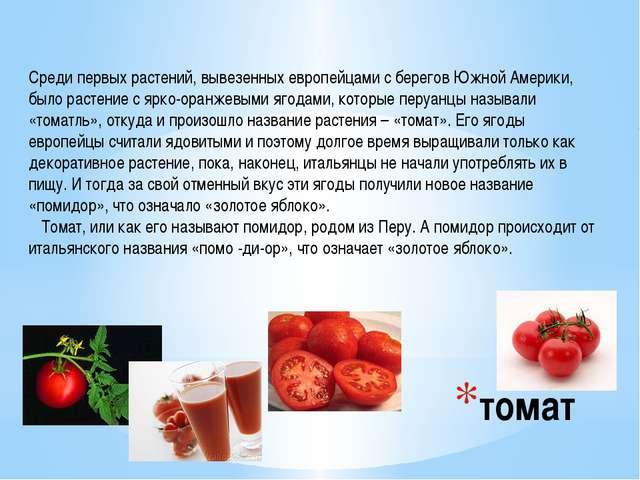 томат Среди первых растений, вывезенных европейцами с берегов Южной Америки,...