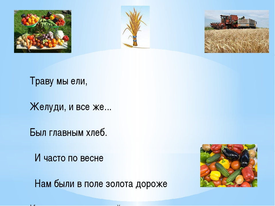 Траву мы ели, Желуди, и все же... Был главным хлеб. И часто по весне Нам были...