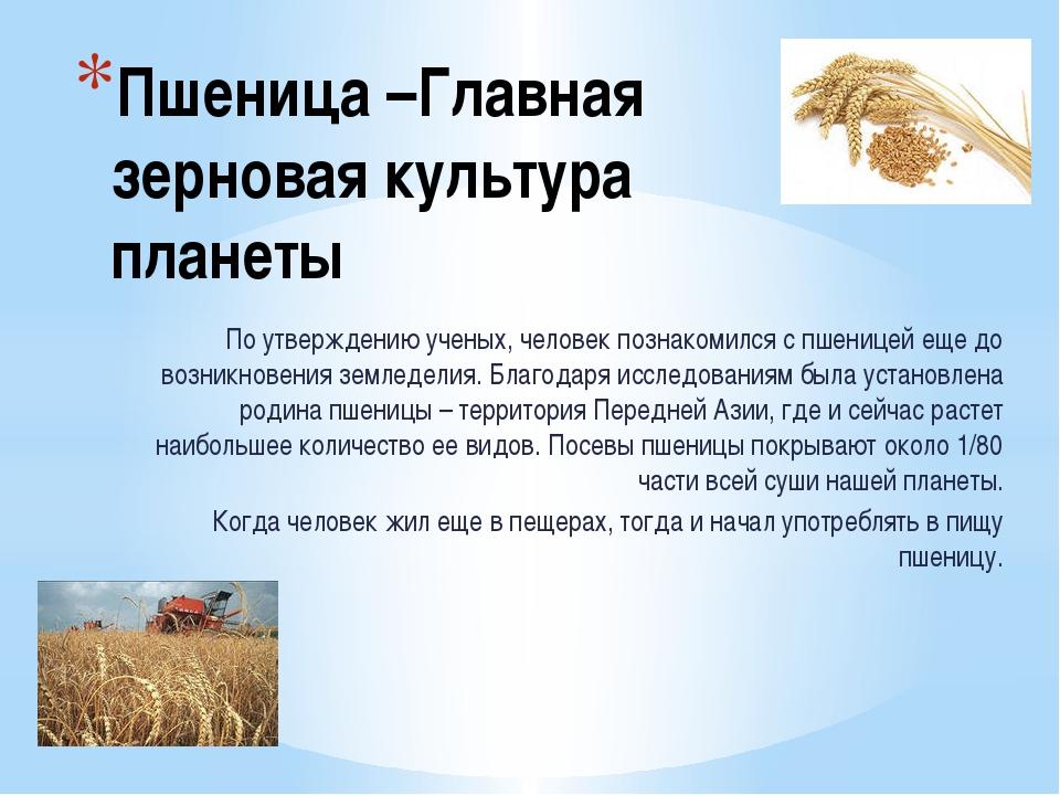 Пшеница –Главная зерновая культура планеты По утверждению ученых, человек поз...