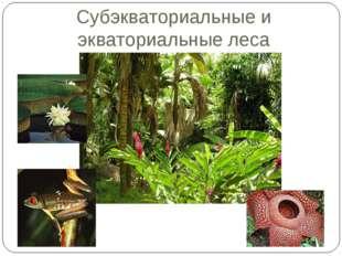 Субэкваториальные и экваториальные леса