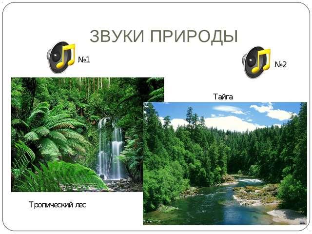 ЗВУКИ ПРИРОДЫ Тропический лес Тайга №1 №2