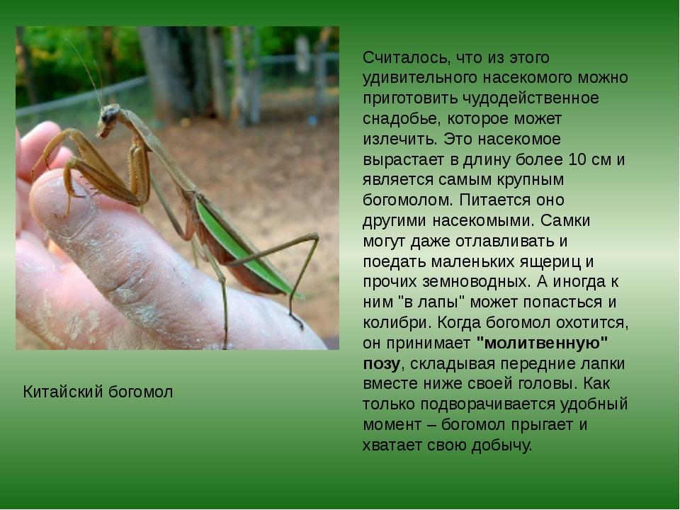 Считалось, что из этого удивительного насекомого можно приготовить чудодейств...