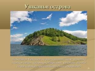 Ушканьи острова На Большом Ушканьем острове постоянно живут несколько десятко