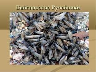 Байкальские Ручейники *