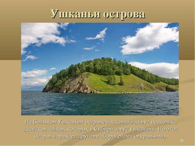 Ушканьи острова На Большом Ушканьем острове постоянно живут несколько десятко...