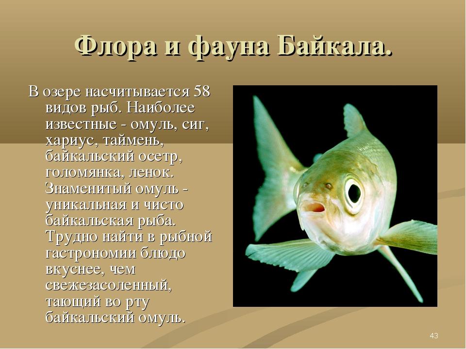 * Флора и фауна Байкала. В озере насчитывается 58 видов рыб. Наиболее известн...
