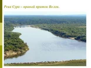 Река Сура – правый приток Волги.