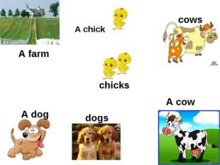 A chick A cow  A dog A farm cows dogs chicks