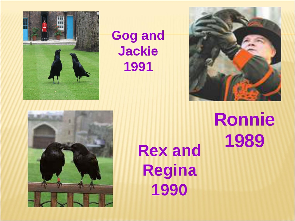 Ronnie 1989 Rex and Regina 1990 Gog and Jackie 1991