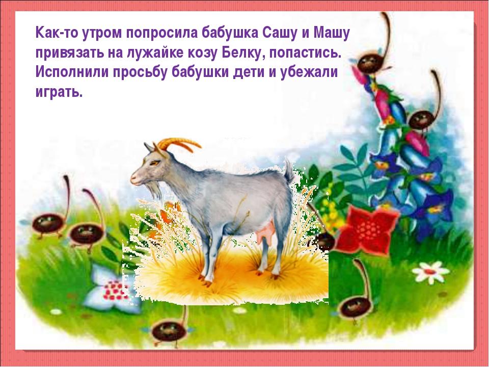 Как-то утром попросила бабушка Сашу и Машу привязать на лужайке козу Белку, п...