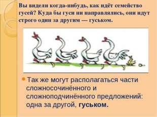 Вы видели когда-нибудь, как идёт семейство гусей? Куда бы гуси ни направлялис