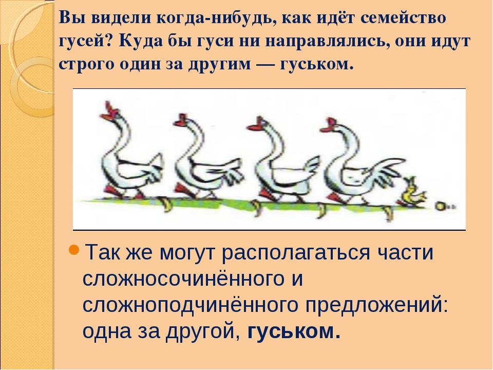 Вы видели когда-нибудь, как идёт семейство гусей? Куда бы гуси ни направлялис...