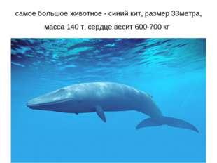 самое большое животное - синий кит, размер 33метра, масса 140 т, сердце весит