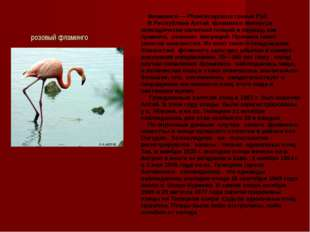 розовый фламинго Фламинго — Phoenicopterus roseus Pall. В Республике Алтай ф