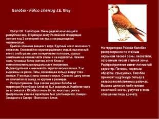 Статус CR. 1 категория. Очень редкий исчезающий в республике вид. В Красную