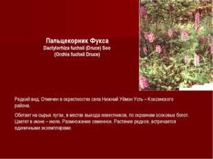 Пальцекорник Фукса Dactylorhiza fuchsii (Druce) Soo (Orchis fuchsii Druce) Ре