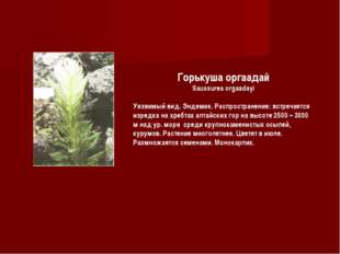 Горькуша оргаадай Saussurea orgaadayi Уязвимый вид. Эндемик. Распространение: