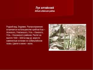 Лук алтайский Allium altaicum pallas Редкий вид. Эндемик. Распространение: вс