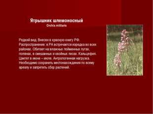 Ятрышник шлемоносный Orchis militaris Редкий вид. Внесен в красную книгу РФ.