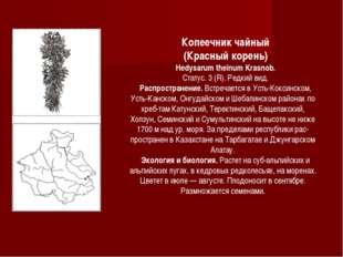 Копеечник чайный (Красный корень) Hedysarum theinum Krasnob. Статус. 3 (R). Р