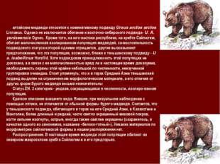 алтайские медведи относятся к номинативному подвиду Ursus arctos arctos Linna