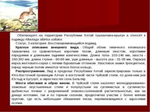 Обитающего на территории Республики Алтай тушканчика-прыгун а относят к подв