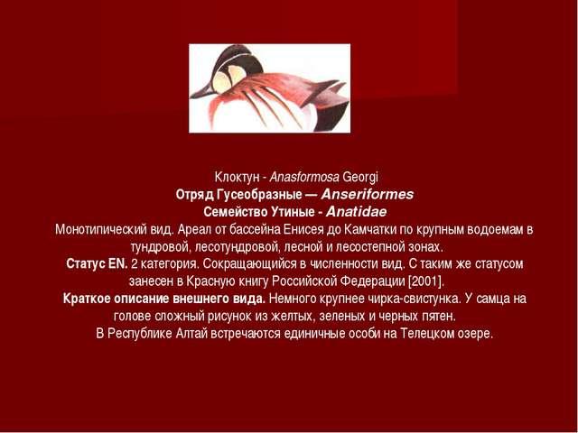 Клоктун - Anasformosa Georgi Отряд Гусеобразные — Anseriformes Семейство Ути...