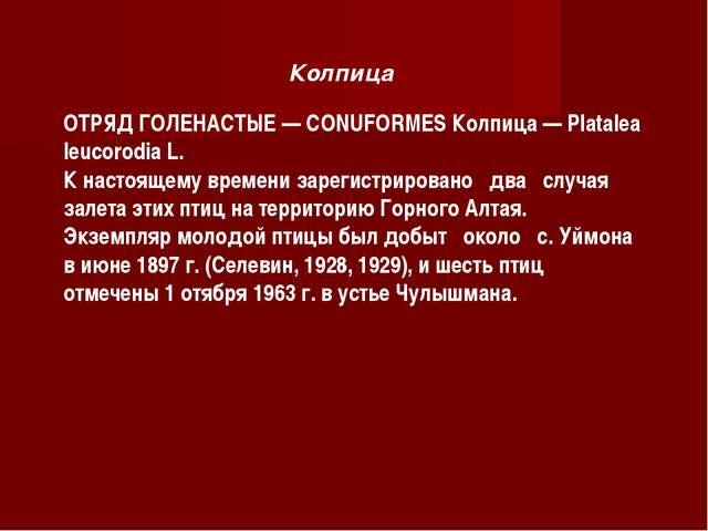 Колпица ОТРЯД ГОЛЕНАСТЫЕ — СONUFORMES Колпица — Platalea leucorodia L. К наст...