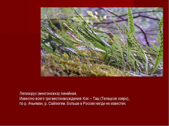 Лепизорус (многоножка) линейная. Известно всего три местонахождения: Кок – Та...