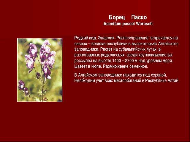 Борец Паско Aconitum pascoi Worosch Редкий вид. Эндемик. Распространение: вст...