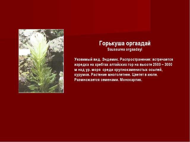 Горькуша оргаадай Saussurea orgaadayi Уязвимый вид. Эндемик. Распространение:...