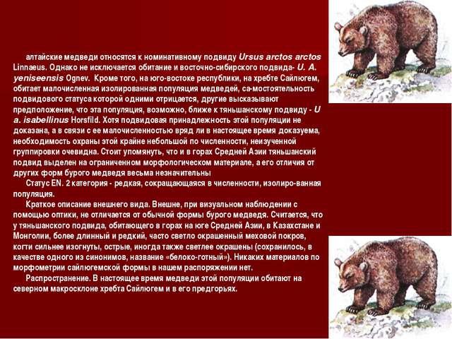 алтайские медведи относятся к номинативному подвиду Ursus arctos arctos Linna...