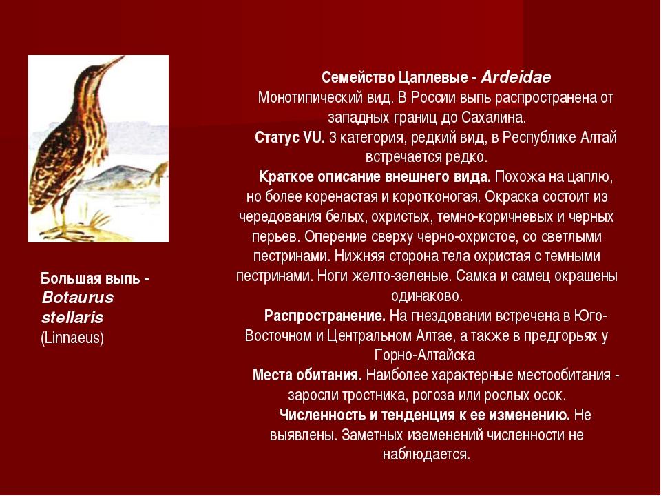 Семейство Цаплевые - Ardeidae Монотипический вид. В России выпь распростране...