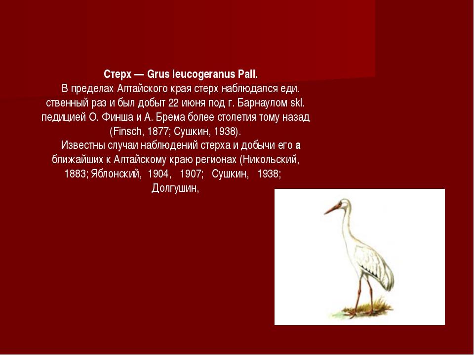 Стерх — Grus leucogeranus Pall. В пределах Алтайского края стерх наблюдался е...