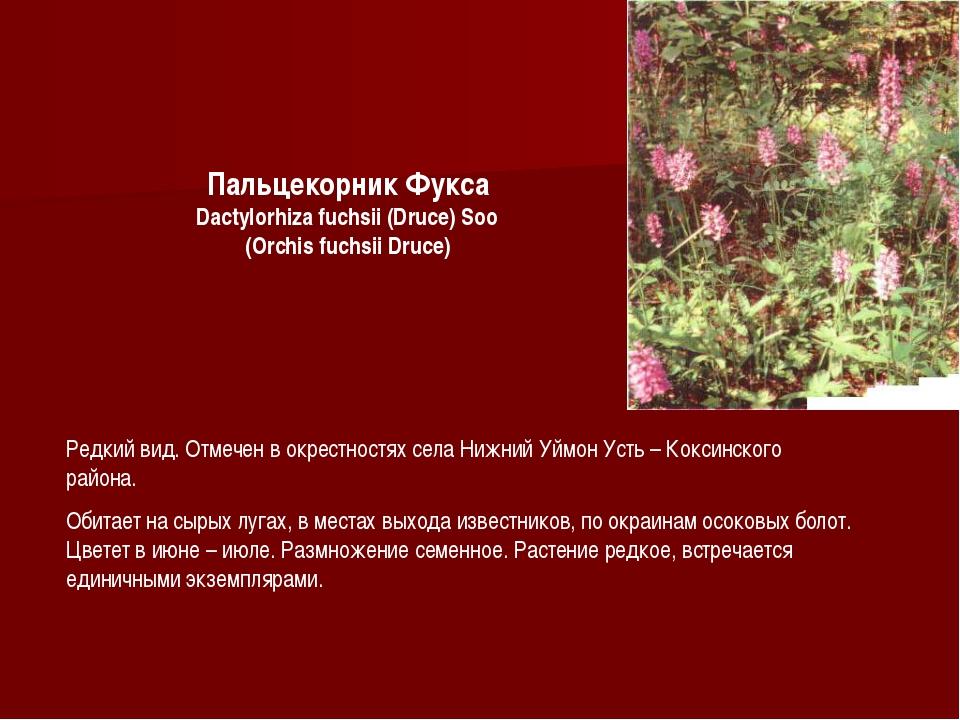 Пальцекорник Фукса Dactylorhiza fuchsii (Druce) Soo (Orchis fuchsii Druce) Ре...
