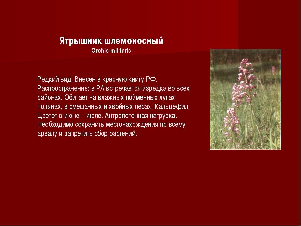 Ятрышник шлемоносный Orchis militaris Редкий вид. Внесен в красную книгу РФ....