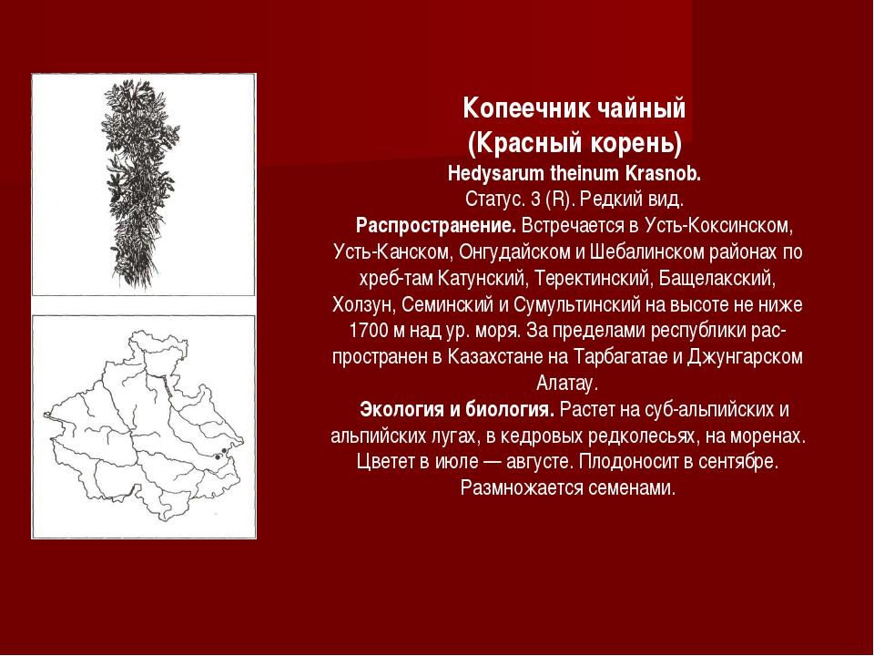 Копеечник чайный (Красный корень) Hedysarum theinum Krasnob. Статус. 3 (R). Р...