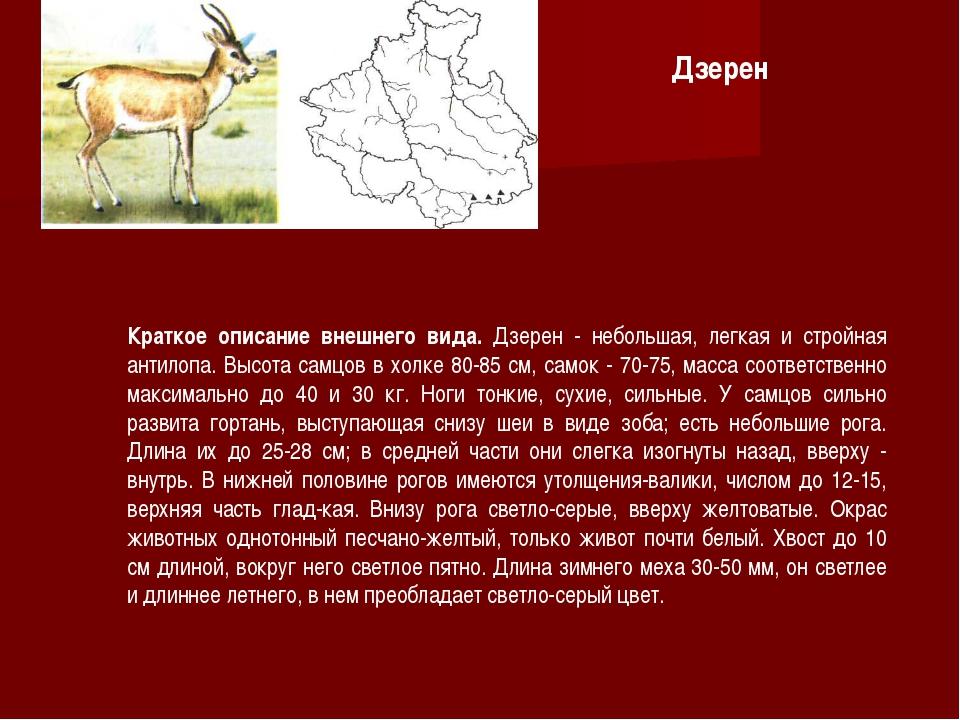 Краткое описание внешнего вида. Дзерен - небольшая, легкая и стройная антилоп...