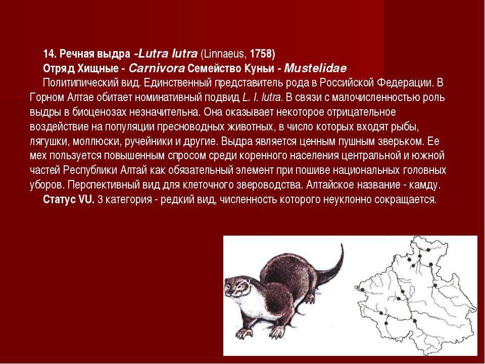 14. Речная выдра -Lutra lutra (Linnaeus, 1758) Отряд Хищные - Carnivora Семей...