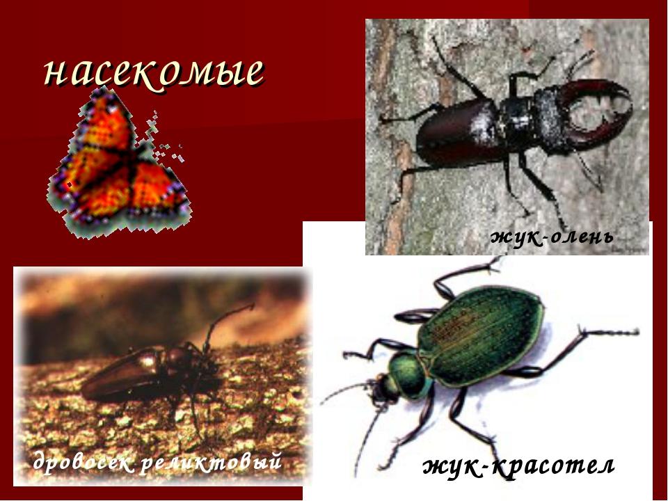 насекомые дровосек реликтовый жук-олень жук-красотел