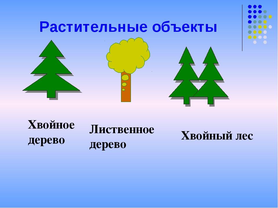 Растительные объекты Хвойное дерево Лиственное дерево Хвойный лес