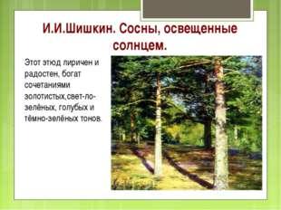 И.И.Шишкин. Сосны, освещенные солнцем. Этот этюд лиричен и радостен, богат со