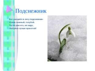 Подснежник Вот расцвёл в лесу подснежник- Очень нежный, голубой. Ты не рви ег