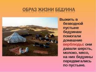 Выжить в безводной пустыне бедуинам помогали домашние верблюды: они давали ше