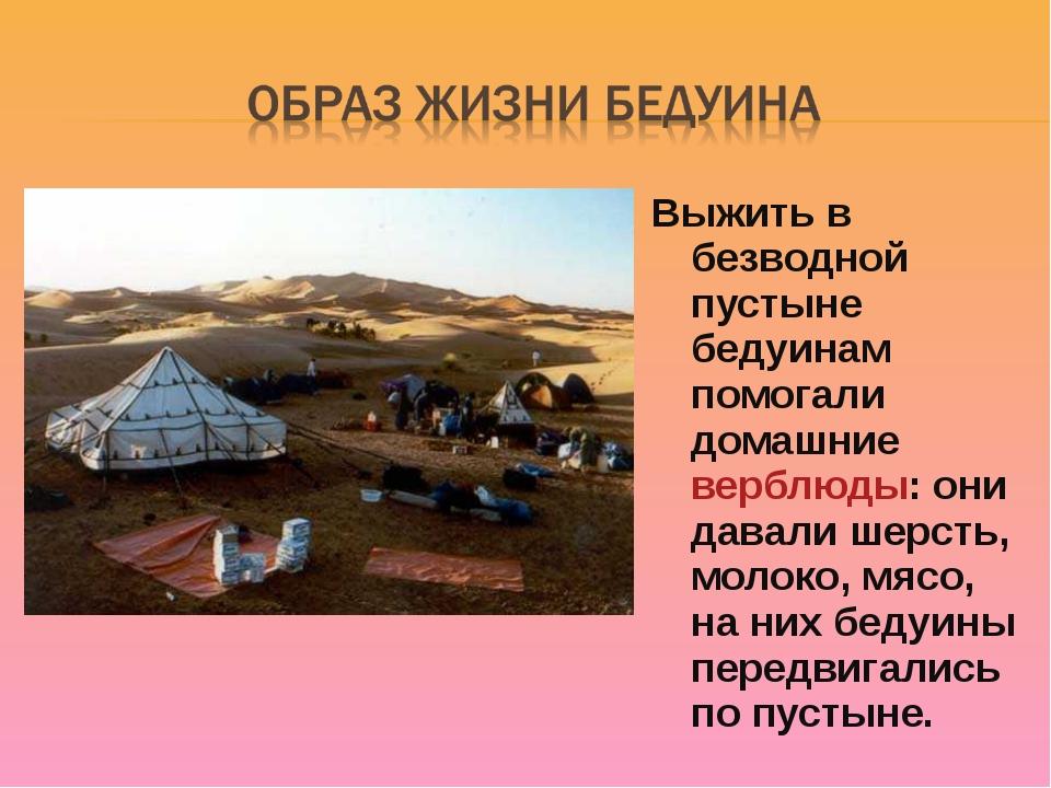 Выжить в безводной пустыне бедуинам помогали домашние верблюды: они давали ше...